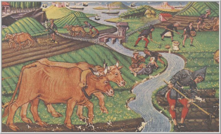 Idade Media agricultura new