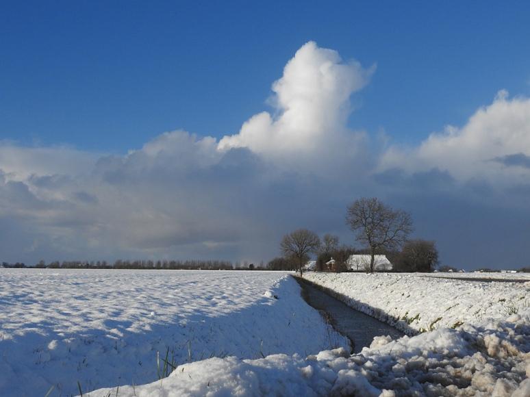 sneeuwleenum