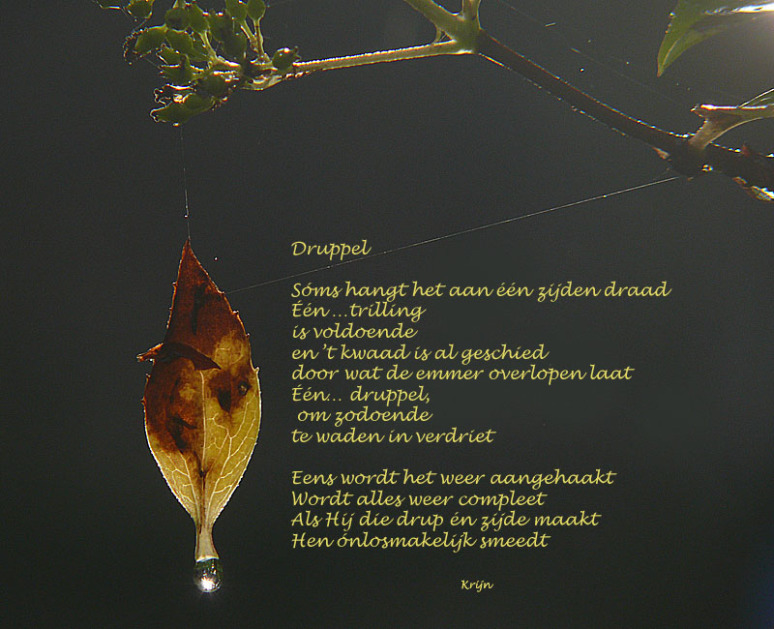 bladdruppel2